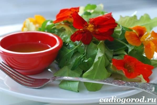 Настурция-цветок-Описание-и-уход-за-настурцией-7