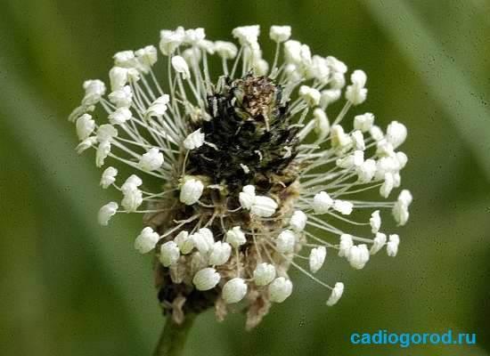 Травы-от-кожных-болезней-11