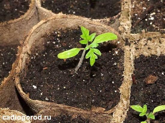 Удобрения-для-рассады-Виды-особенности-и-дозировки-удобрений-1
