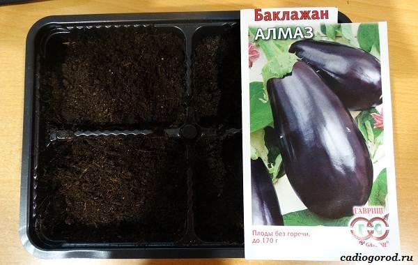 Выращивание-баклажанов-Как-и-когда-сажать-баклажаны-1