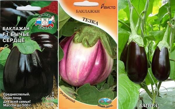 Выращивание-баклажанов-Как-и-когда-сажать-баклажаны-17