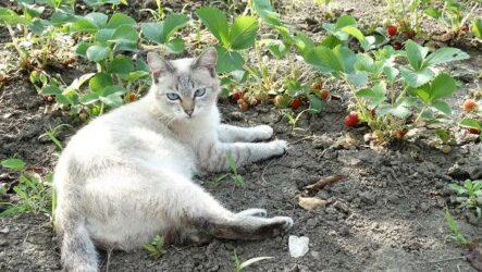 Выращивание клубники. Как и когда сажать клубнику? Уход за клубникой