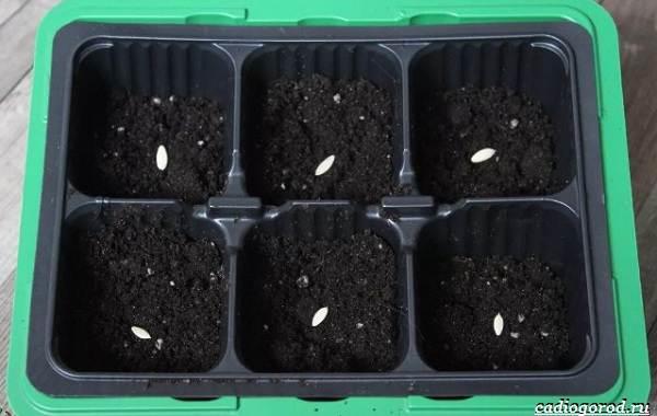 Выращивание-огурцов-Как-и-когда-сажать-огурцы-Уход-за-огурцами-17