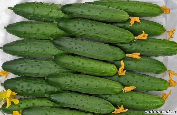 Выращивание-огурцов-Как-и-когда-сажать-огурцы-Уход-за-огурцами-20
