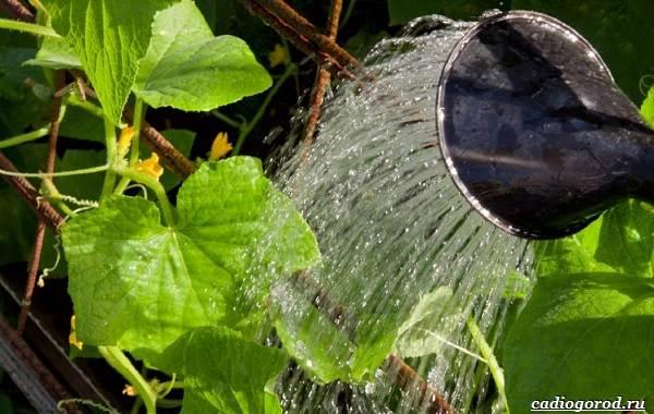 Выращивание-огурцов-Как-и-когда-сажать-огурцы-Уход-за-огурцами-21