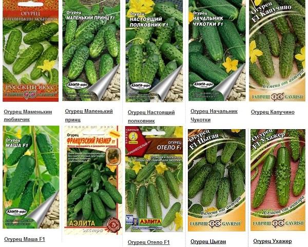 Выращивание-огурцов-Как-и-когда-сажать-огурцы-Уход-за-огурцами-25