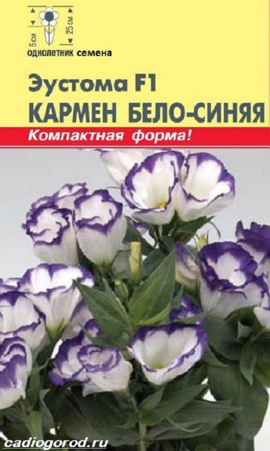 Эустома-цветок-Выращивание-эустомы-Уход-за-эустомой-8