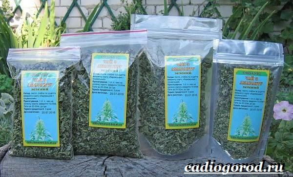Амарант-растение-Выращивание-амаранта-Уход-за-амарантом-20