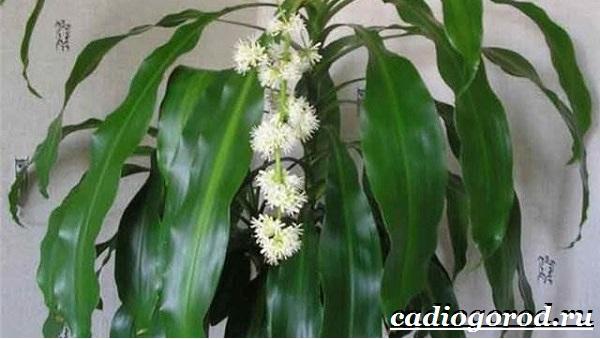 Бамбук-растение-Выращивание-бамбука-Уход-за-бамбуком-18
