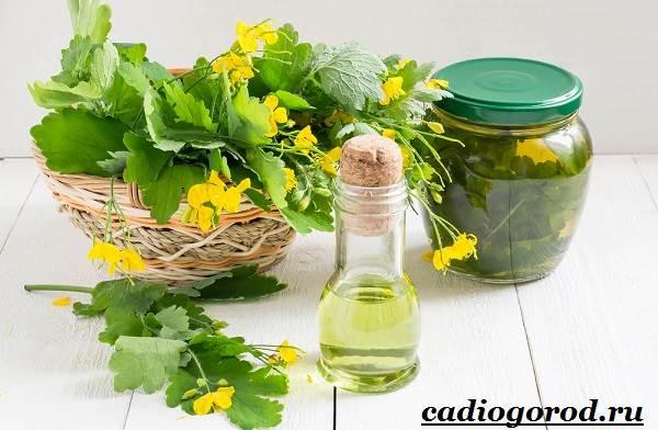 Чистотел-растение-Описание-особенности-и-виды-чистотела-12
