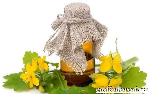 Чистотел-растение-Описание-особенности-и-виды-чистотела-8