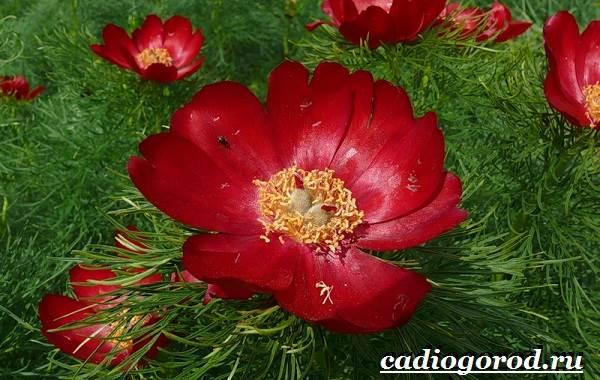 Цветы-Красной-книги-России-7