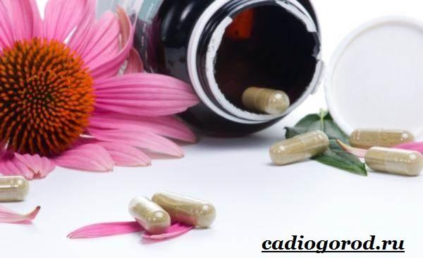 Эхинацея-трава-Выращивание-эхинацеи-Виды-и-польза-эхинацеи-4