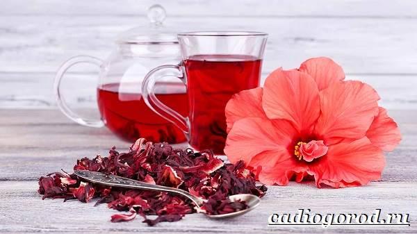 Гибискус-цветок-Выращивание-гибискуса-Уход-за-гибискусом-9