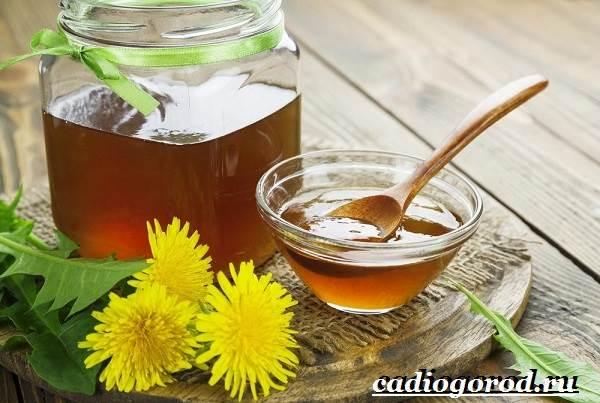 Одуванчик-растение-Описание-особенности-лечебные-свойства-и-применение-одуванчика-9