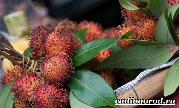 Рамбутан-фрукт-Выращивание-рамбутана-Свойства-рамбутана-7