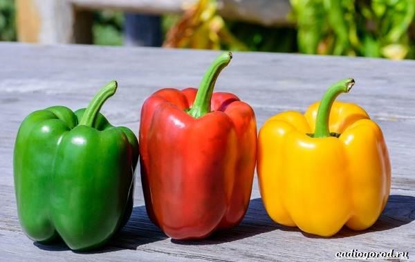 Выращивание-сладкого-перца-Как-и-когда-сажать-сладкий-перец-Уход-за-перцем-24