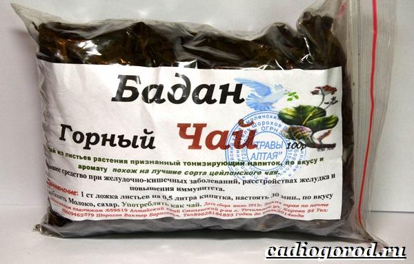Бадан-растение-Описание-особенности-виды-и-уход-за-баданом-14