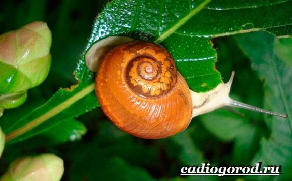Энотера-цветок-Описание-особенности-виды-и-уход-за-энотерой-