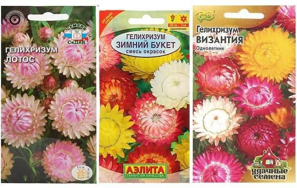Гелихризум-цветок-Выращивание-и-уход-за-гелихризумом-4