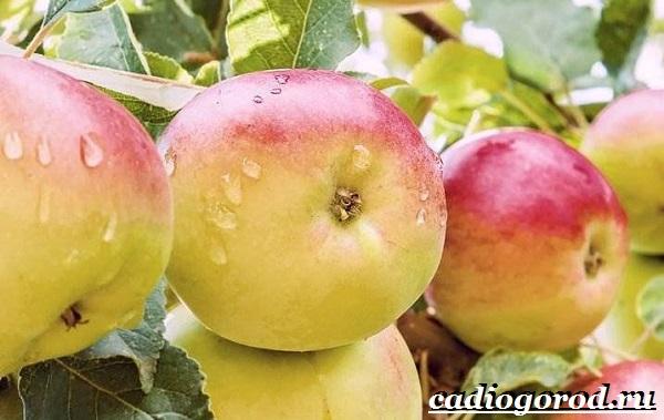 Как-вырастить-яблоню-11