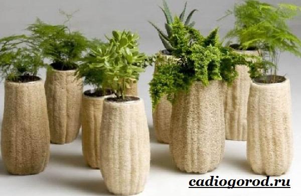 Люффа-мочалка-растение-Описание-особенности-виды-и-уход-за-люффой-9