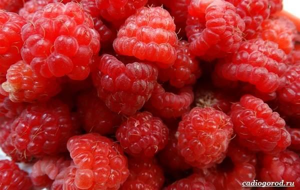 Малина-ягода-Выращивание-малины-Уход-за-малиной-44