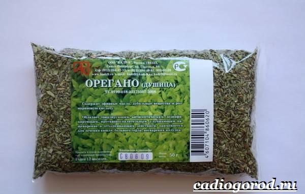 Орегано-растение-Описание-особенности-виды-и-уход-за-орегано-4