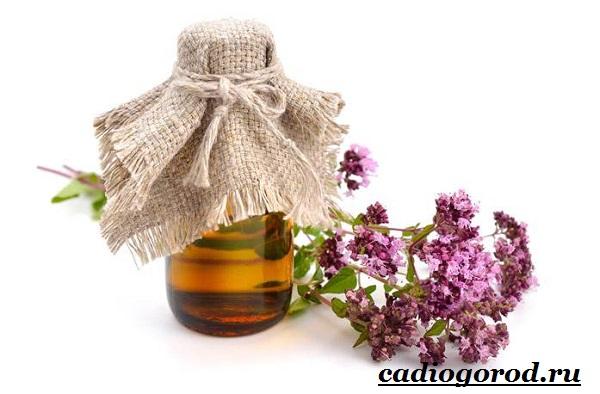 Орегано-растение-Описание-особенности-виды-и-уход-за-орегано-6