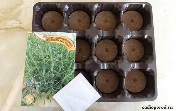 Розмарин-растение-Описание-особенности-виды-и-выращивание-1