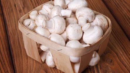 Шампиньоны грибы. Выращивание, уход и полезные свойства
