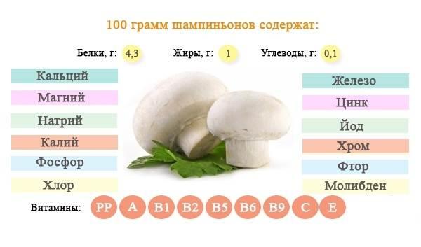 Шампиньоны-грибы-Выращивание-уход-и-полезные-свойства-6