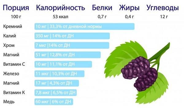 Шелковица-тутовое-дерево-Описание-особенности-виды-и-уход-за-шелковицей-22