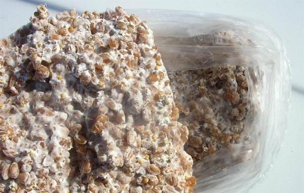 Шиитаке-грибы-Выращивание-уход-и-полезные-свойства-16