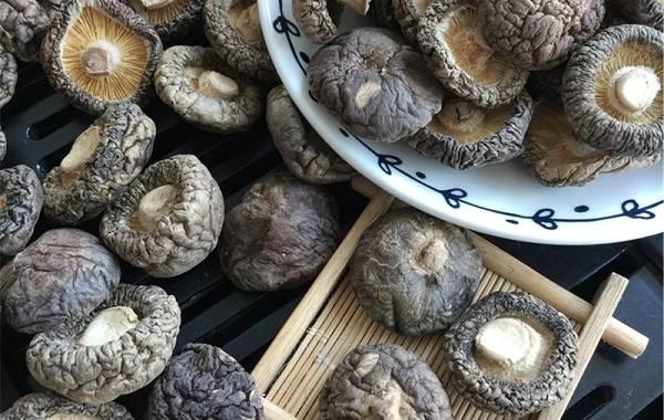 Шиитаке-грибы-Выращивание-уход-и-полезные-свойства-4