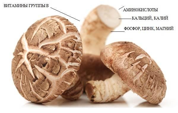 Шиитаке-грибы-Выращивание-уход-и-полезные-свойства-5