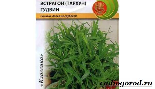 Тархун-трава-Описание-свойства-виды-и-уход-за-тархуном-1