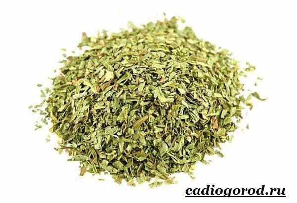 Тархун-трава-Описание-свойства-виды-и-уход-за-тархуном-10