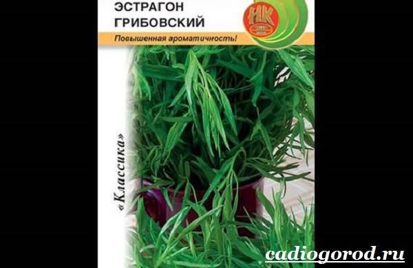 Тархун-трава-Описание-свойства-виды-и-уход-за-тархуном-5