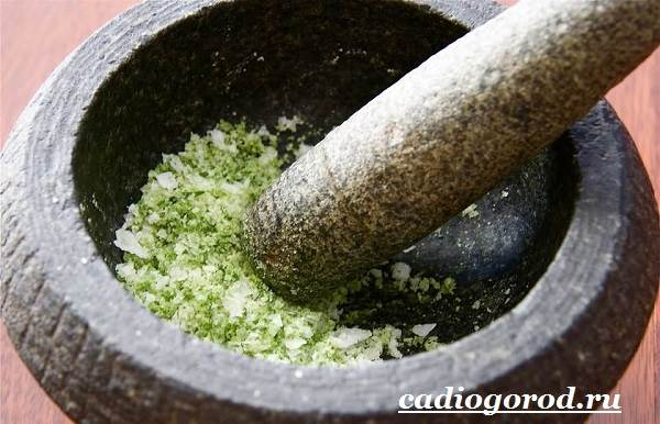 Тархун-трава-Описание-свойства-виды-и-уход-за-тархуном-8