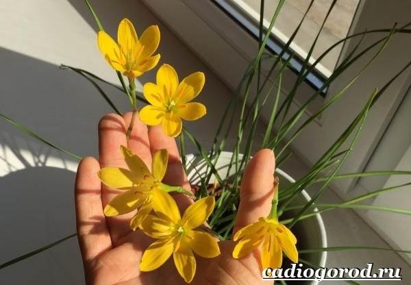 Выскочка-цветок-Выращивание-выскочки-Уход-за-выскочкой-3