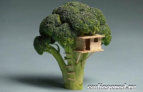 Брокколи-капуста-Выращивание-брокколи-Уход-за-брокколи-29