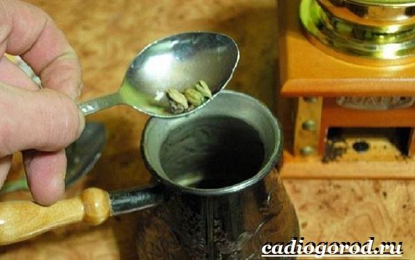 Кардамон-растение-Описание-свойства-выращивание-и-применение-кардамона-6