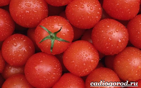 Томаты черри. Описание, особенности, выращивание и сорта томатов черри-11