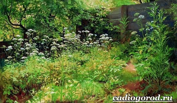 Черная-книга-растений-Растения-занесённые-в-чёрную-книгу-10