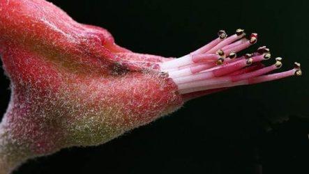 Педилантус цветок. Описание, особенности, виды и уход за педилантусом
