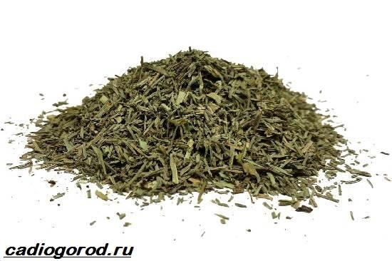 Хвощ-полевой-трава-Описание-особенности-виды-и-свойства-хвоща-полевого-4