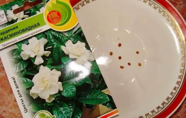 Гардения-цветок-Описание-особенности-уход-и-цена-гардении-15