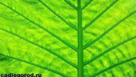 Что такое фотосинтез? Описание, особенности, фазы и значение фотосинтеза