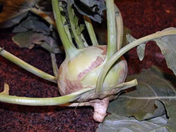 Капуста-кольраби-Описание-особенности-виды-и-выращивание-кольраби-19
